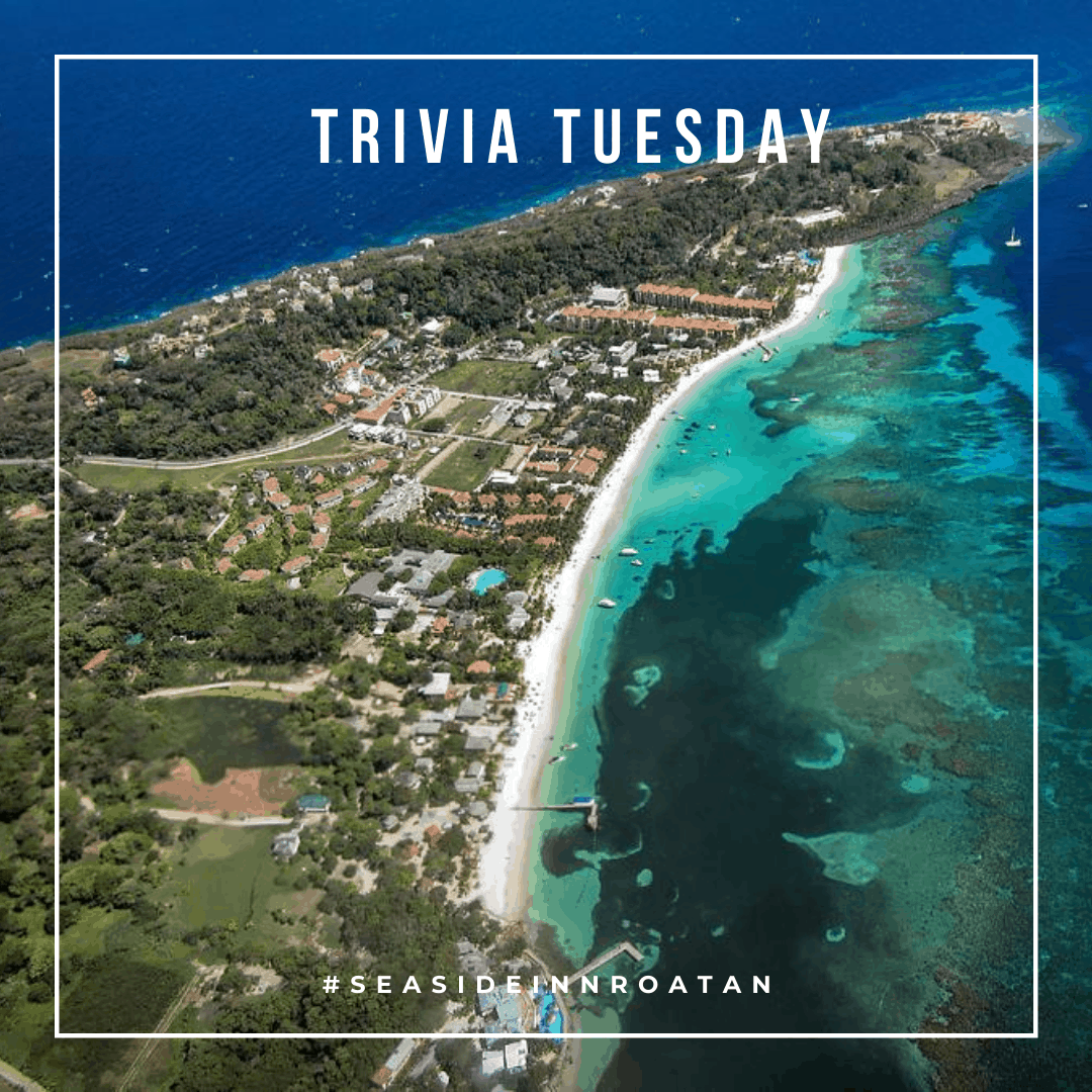 trivia tuesday Roatan