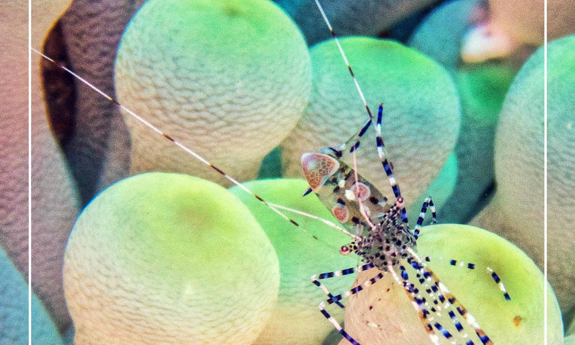 diving roatan seasideinnroatan